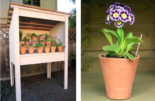Auricula Theatre and Detail Auricula
