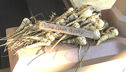Hollow Crown Parsnips Ross Bay Villa