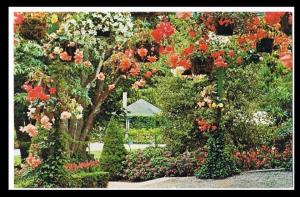 Butchart Gardens Begonias